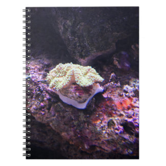 Colorful Soft Coral And Live Rocks Notebook