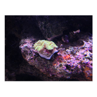 Colorful Soft Coral And Live Rocks Postcard