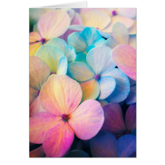 Colorful Spring Flower Card