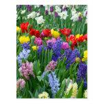 Colorful spring flower garden postcard