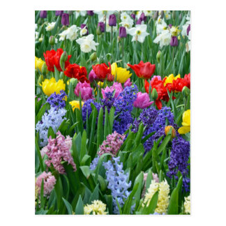 Colorful spring flower garden postcard