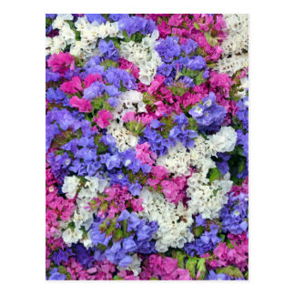 Colorful spring flowers postcard