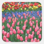 Colorful spring tulip garden square sticker