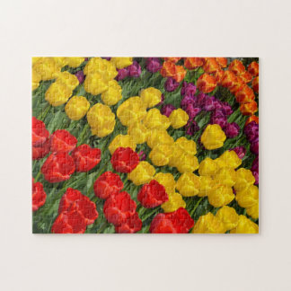 Colorful spring tulip rows jigsaw puzzle