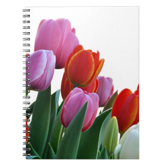Colorful Spring Tulips Note Books