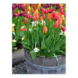 Colorful spring tulips planter print postcard