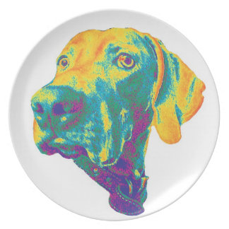 Colorful staring weimaraner plate