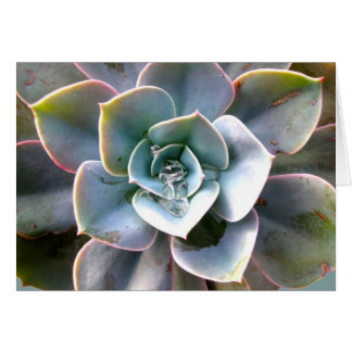Colorful Succulent #3 Note Card