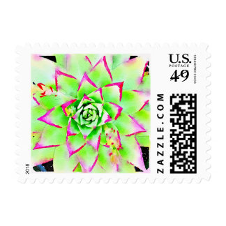 Colorful Succulent Stamp