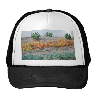 Colorful Succulents Trucker Hat