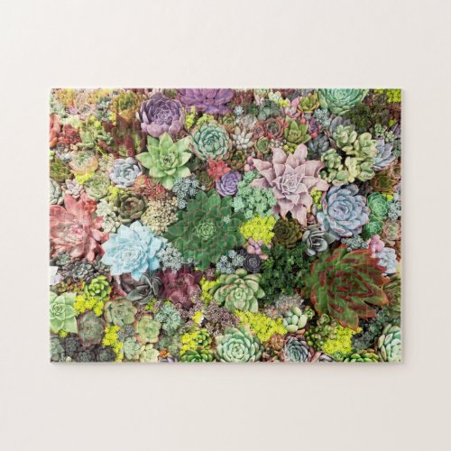 Colorful Succulents Jigsaw Puzzle