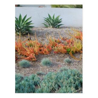 Colorful Succulents Postcard