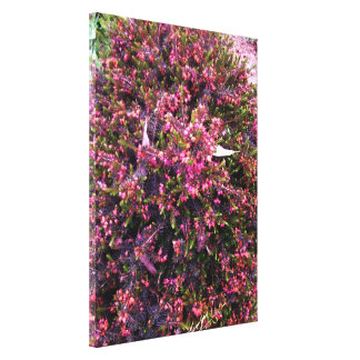 Colorful Summer flowering Heather Canvas Prints