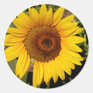 Colorful Sunflower Classic Round Sticker