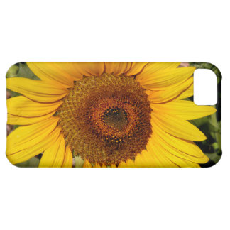 Colorful Sunflower iPhone 5C Covers