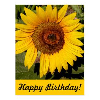 Colorful Sunflower Postcard