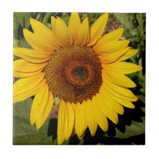 Colorful Sunflower Small Square Tile