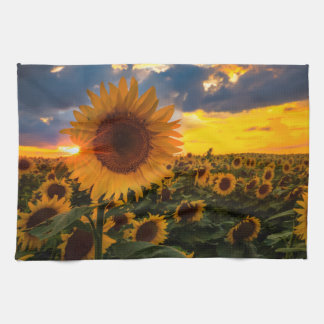 Colorful Sunflowers in a Field Towel