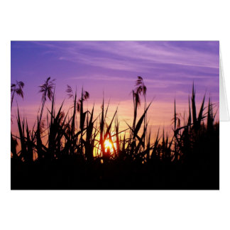 Colorful Sunset in the Reed - Greeting Card