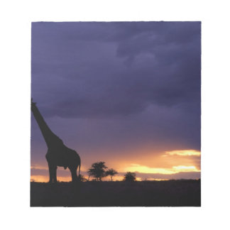 Colorful sunset late afternoon image of safari memo note pads