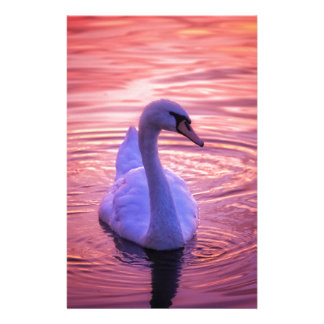 Colorful Sunset Swan Stationery