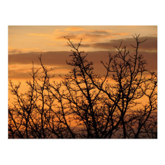 Colorful Sunset with tree silhouette Postcard