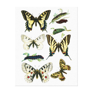 Colorful Swallowtail Butterfly, Caterpillar & Moth Canvas Print