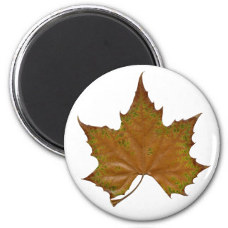 colorful sycamore leaf 2 inch round magnet