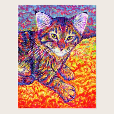 Colorful Tabby Cat Maine Coon Kitten Postcard