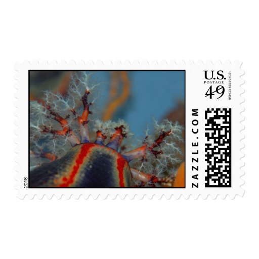 Colorful Tentacles Postage