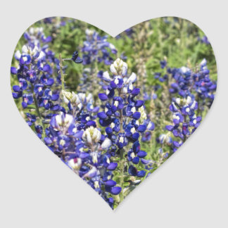 Colorful Texas Bluebonnets - Lupinus texensis Heart Sticker