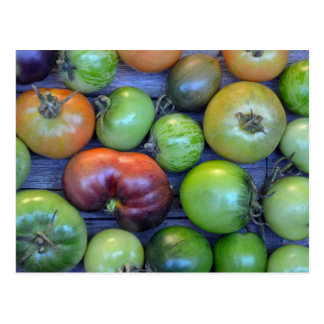 Colorful tomatoes print postcard
