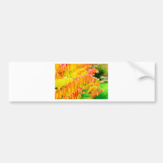 Colorful tree leaves in autumn season outdoors bumper sticker