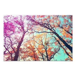 Colorful trees photo print