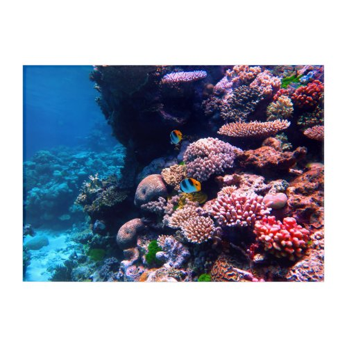Colorful Tropical Coral Reef Acrylic Print