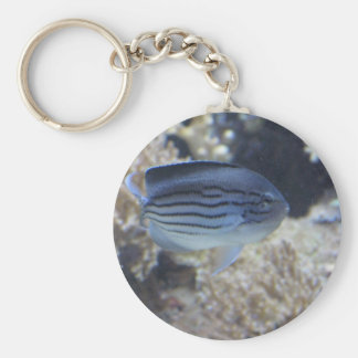Colorful tropical fish picture basic round button keychain