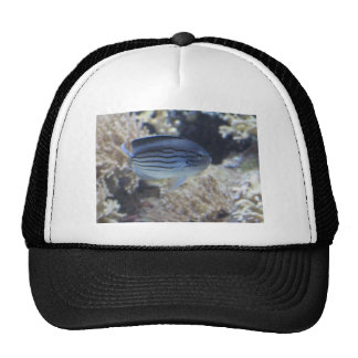 Colorful tropical fish picture trucker hat