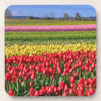 Colorful tulip field drink coaster