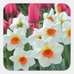 Colorful tulips and daffodils garden square sticker