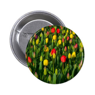 Colorful Tulips Button