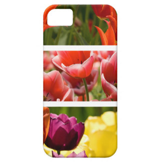 Colorful Tulips iPhone 5 Case