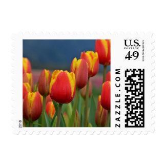 Colorful Tulips Post Stamp