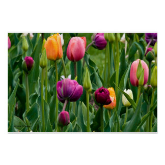 Colorful Tulips Print