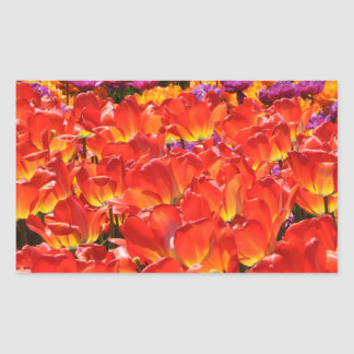 Colorful Tulips Rectangular Sticker
