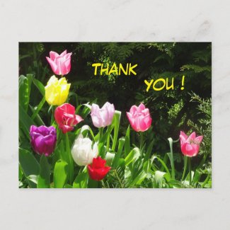 Colorful Tulips Thank You Postcard
