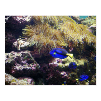 Colorful Undersea World/Coral Reef Marine Life ll Postcard