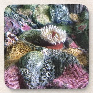 Colorful Underwater Aquarium Coral Reef Coaster