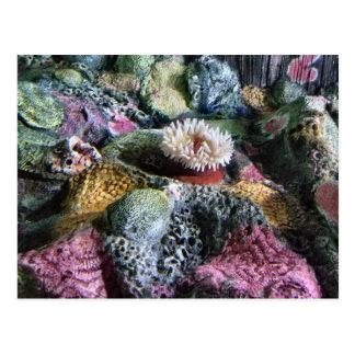 Colorful Underwater Aquarium Coral Reef Postcard