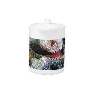 Colorful Underwater Aquarium Coral Reef Teapot