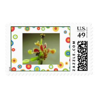 Colorful Venus FlyTrap Stamps